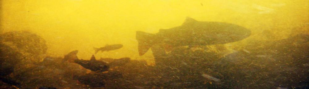 Southeast Alaska Fish Habitat Partnership