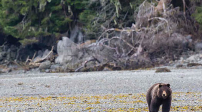 From Salmon to Seabirds: A New Ecological Atlas of Southeast Alaska